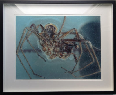 spider_that_died_cornelia_parker